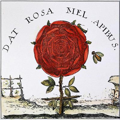 rosa21